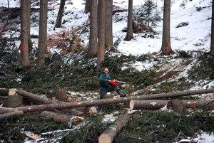 Těžba dřeva na revíru Komorní Lhotka